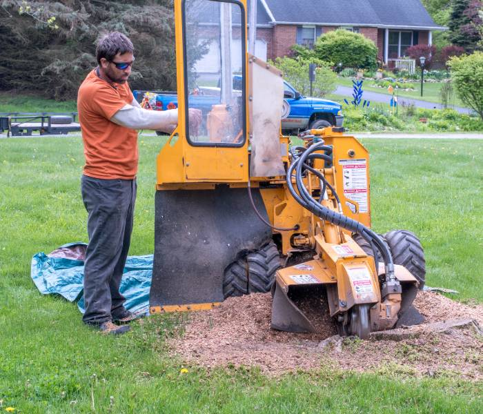 equipment for stump removal and grinding in New Orleans