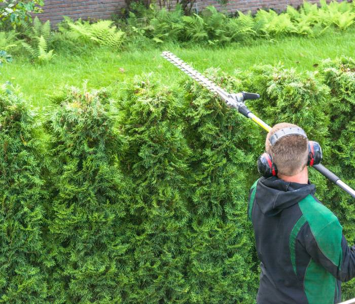 expert shrub trimming services in New Oreans